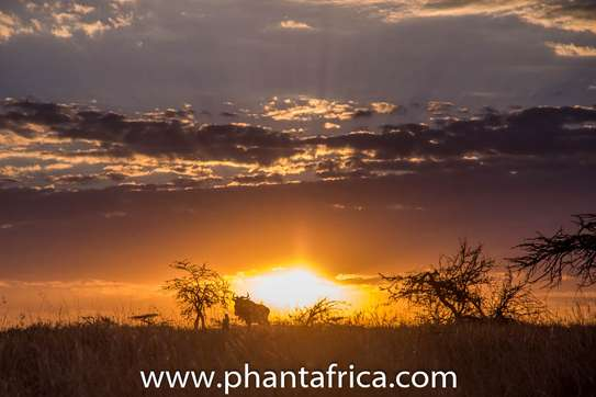 Phant Africa Adventures and Events image 3