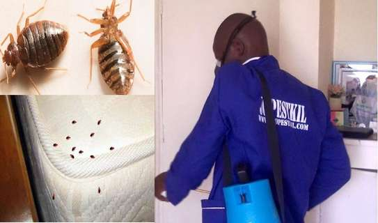 Best Pest Control (Bedbugs, Insects, Rodents, Termites) Professionals Nairobi image 11