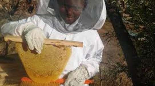 Beekeeping Services Meru   Make an impact. Bring bees to your backyard. image 12