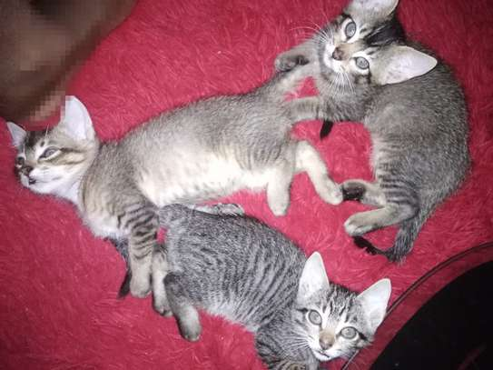3 kittens need a new home image 1
