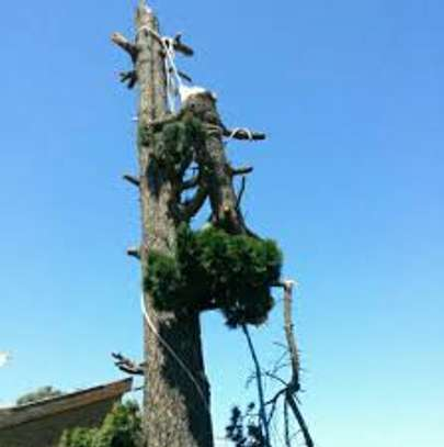 Fast, Professional And Affordable Tree Felling Service. Great Rates. image 4