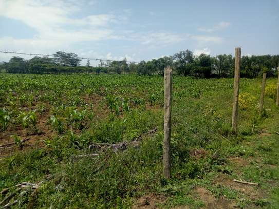 1acre land for sale in Naivasha image 10