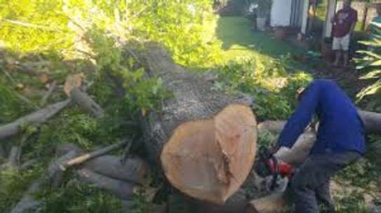 Tree cutting & Site Clearance -Free Quotes image 1