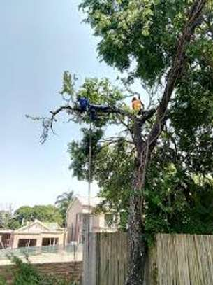 Tree cutting & Site Clearance -Free Quotes image 3