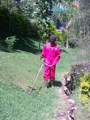 Landscaping, gardening and maintaining. image 3