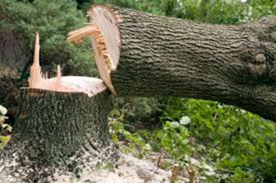 Tree Cutting & Removal.Fast, Professional And Affordable.Landscaping & Gardening Services image 2