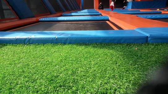 Turf Grass image 7