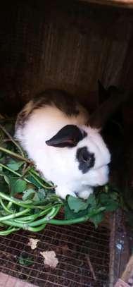 Rabbits image 3