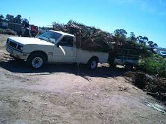 Professional Tree Removal. Expert Service and Care. image 2