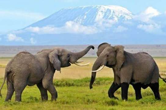 Travel Packages & Safaris