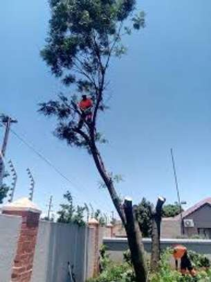 Tree cutting & Site Clearance -Free Quotes image 10