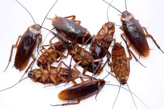 Pest control  and Fumigation services image 5
