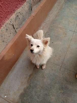 Chihuahua love image 4