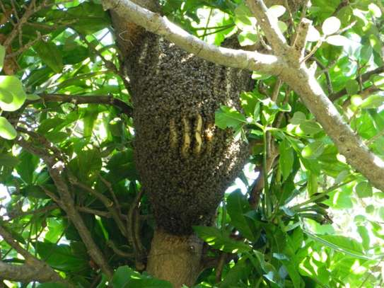 Are you experiencing a Bee Infestation? We can help you! image 3
