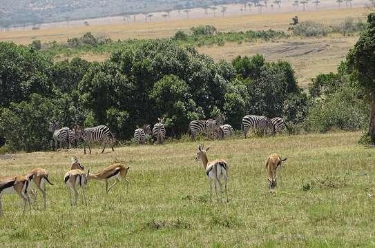 Nairobi National Park Day Trip image 3