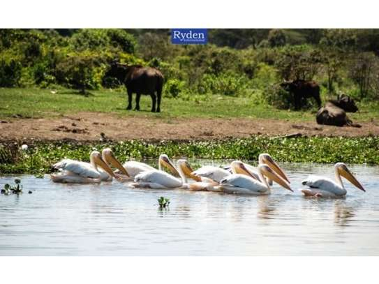 land for sale in Naivasha East image 12