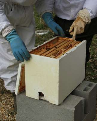 Beekeeping Services Meru   Make an impact. Bring bees to your backyard. image 8