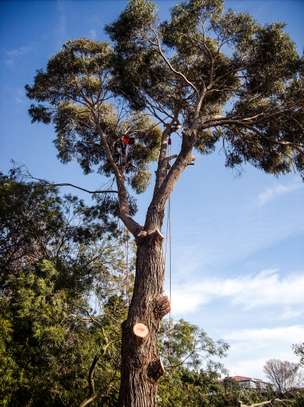 Tree Experts | Tree Removal, Tree Pruning-Free Consultation.Call Now image 3