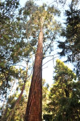 Tree Experts | Tree Removal, Tree Pruning-Free Consultation.Call Now image 10