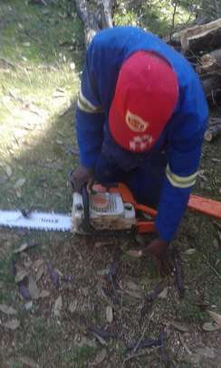 Tree Trimming Services in Nairobi.100% Satisfaction Guarantee. Call now! image 2