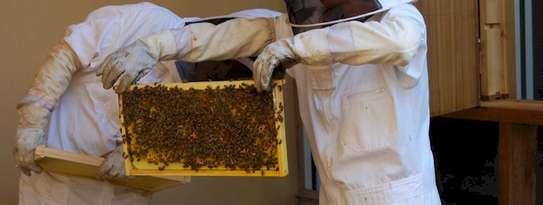 Beekeeping Services Meru   Make an impact. Bring bees to your backyard. image 11