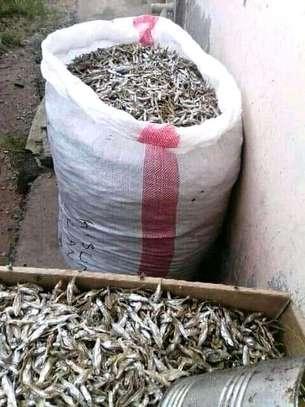 Fish supplies image 2