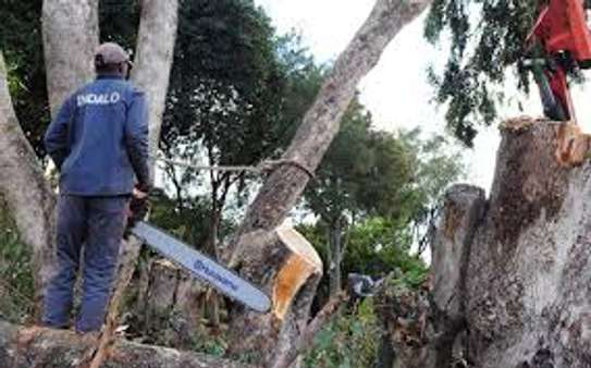 Cheap Tree Cutting Services Nairobi and Surrounding. image 8