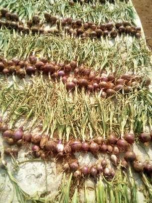 Onions image 1