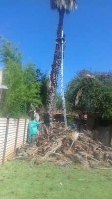 Tree Felling Services, Palm Tree Cleaning and Stump Removals image 6
