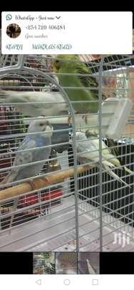 Karimz Pet Shop image 1