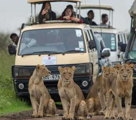 3 Days 2 Nights Maasai Mara Safari @Ksh 19,600