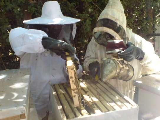 Modern  Bee Farmers image 1