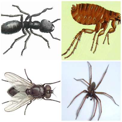 Best Pest Control (Bedbugs, Insects, Rodents, Termites) Professionals Nairobi image 6