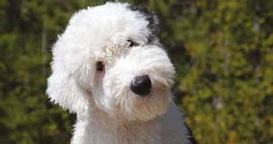 Mobile Dog Grooming - We Come To You.Call Us Today! image 1