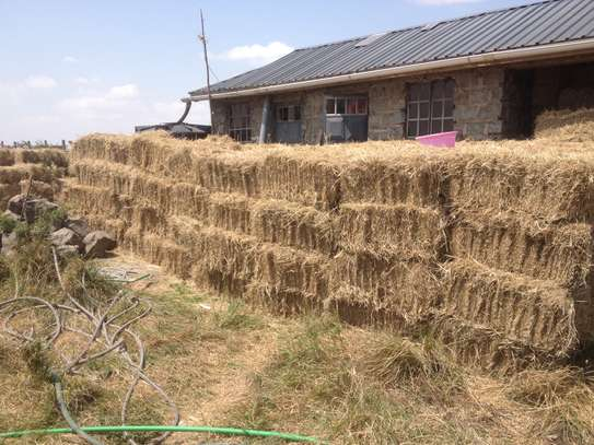 Fresh Hay image 3