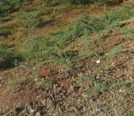 23 acre land for sale in Taveta image 1