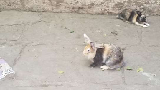 Rabbits for sell morethan two species