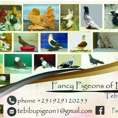 Fancy pigeons ,birds, dogs,and other pet's