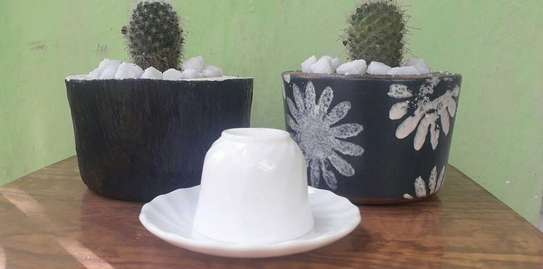 Indoor And Outdoor Plants with Cement Pot