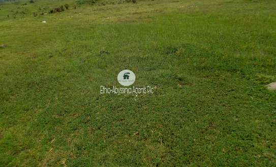 50,000 Sqm Land For Sale