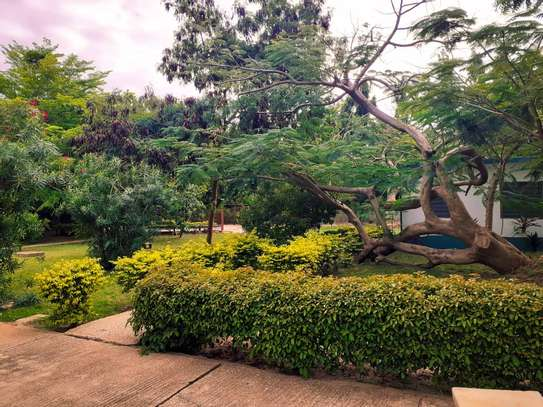 4 Bedroom Standalone House In Masaki With A Mature Garden image 2