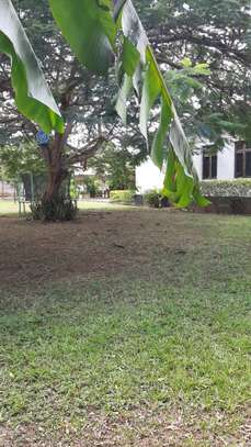 3 Bedrooms  House For Rent in Oysterbay image 3