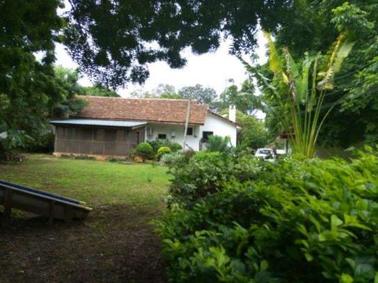 4bed houde at oyster bay $2000pm image 10