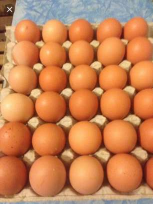 Fresh Eggs 3 Trays Per Day