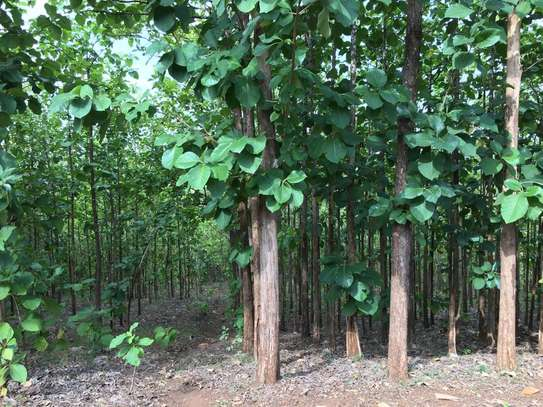 40acre of tree mitik for sale at tanga tsh 500,000 for quibiq image 5