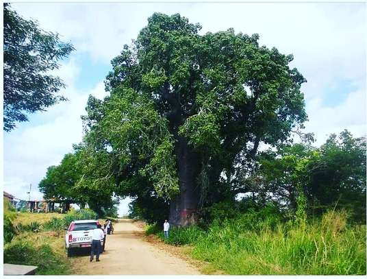 MOROGORO LARGE SIZE LAND AT GOOD LOCATION AT VERY LOW PRICE FOR SALE image 2