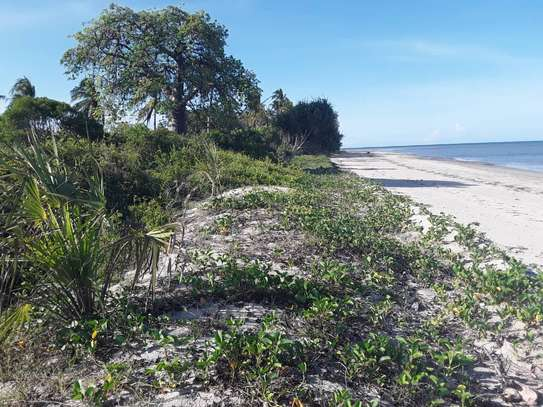 OCEANFRONT LAND FOR SALE IN TANGA CITY image 8