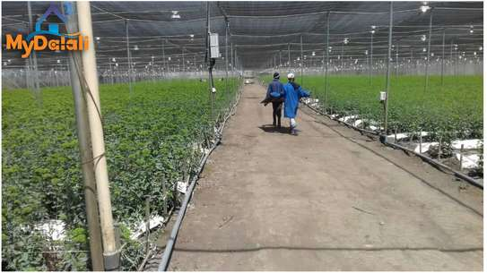 445 Acres ( 180 Hectares) Flower Farm in Arusha image 3