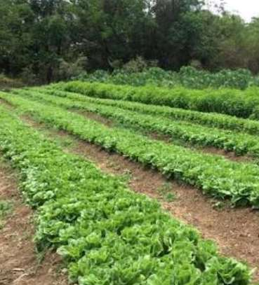 250 Acres Farm in Mkuranga pagai, with clean tittle deed. image 1