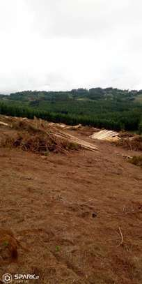 farm for sale at mufindi at iringa 100 acre with pine  tree , for sale tsh 1,500,000per acres image 3